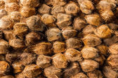 Group of Coconuts. — Stock Photo