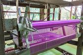 Rosa di tessitura della seta. — Foto Stock