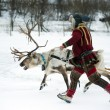 Reindeer breeder dressed in national Same clothes with a reinde — Stock Photo #69366365