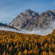 Colorful Autumn Forest and Mountain-Dolomite,Italy — Stock Photo #63316729