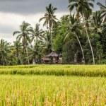 Green rice terraces - Bali, Indonesia — Stock Photo #63582203