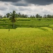Wide green rice terraces - Bali, Indonesia — Stock Photo #63582283