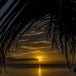 Yellow Sunset with Palm Leaf-Philippines — Stock Photo #64446405