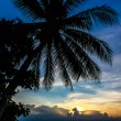 Magic Colorful Sunset with Palm Tree Silhouette — Stock Photo #65912179