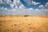 Australia outback — Stock Photo