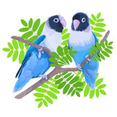 Pair of blue masked lovebirds. — Stock Vector