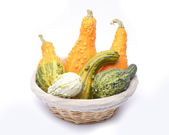 Basket and colorful pumpkins collection — Stock Photo