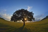 Lonely tree on field at dawn — Stock Photo