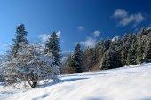 Beautiful winter landscape in mountain — Stock Photo