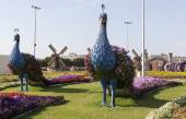 Flower Park in Dubai (Dubai Miracle Garden). United Arab Emirates. — Stock Photo