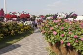 Flower Park in Dubai (Dubai Miracle Garden). United Arab Emirates. — Stock Photo
