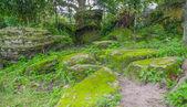 Moss on rocks — Stock Photo