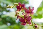 Streaked orchid flower — Stock Photo
