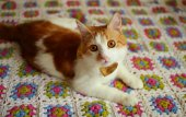 Cat lying on a colorful plaid — Stock Photo