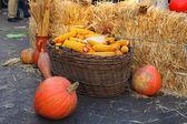 Full basket with ears of corn and pumpkins on a holiday in the city of Chisinau — Stockfoto