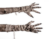 Halloween theme: terrible old mummy hands on a white background — Stock Photo