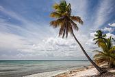 Palm Tree in Sahona Island — Stock Photo