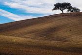 Farm Field — Stock Photo