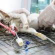 Cat was operated on operate table by veterinarian in Thailand — Stockfoto #61326327