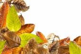 Leaves overlap background — Stock Photo