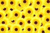 Artificial sunflower background (Helianthus annuus) — Stock Photo