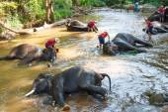 Thai elephant was take a bath with mahout (elephant driver , elephant keeper ) in Maesa elephant camp ,  Chiang Mai , Thailand — Stock Photo