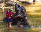 Thai elephant was take a bath with mahout (elephant driver , ele — Stock Photo