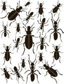 Set Ants Silhouette Vector — Stock Vector