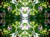 a repeating pattern of flowers and leaves in the sun — Stock Photo