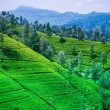 Beautiful tea estate — Stock Photo #55133715