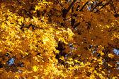 Żółte liście — Zdjęcie stockowe