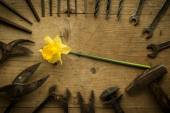 Old retro used tools with narcissus — Stock fotografie