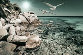 Seagulls   in Northern Greece — Stok fotoğraf
