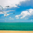 Seagulls over sea — Stock Photo #58050793