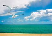 Seagulls over sea — Stock Photo
