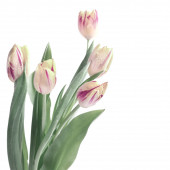 Bunch of stripy tulips — Stock Photo