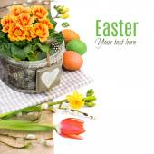 Easter border with primrose — Stock Photo