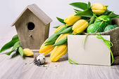 Easter border with tulips — Stockfoto
