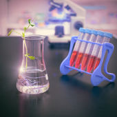 Experimental plant in a flask with scientific lab — Stock Photo