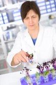 Senior scientist testing cress sprouts — Stock Photo