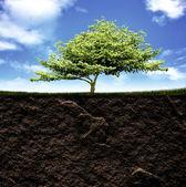 Przekrój trawy i ziemi przed błękitne niebo — Zdjęcie stockowe