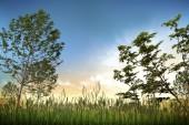 Sunset Nature Sky image — Stock Photo