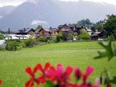 Switzerland log house with flower — Stock Photo
