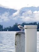 Gull on white pole at lake — Stock Photo