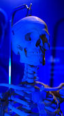 Skeleton in blue light halloween scary — Stock Photo