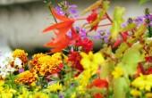 Färgglada blommor bakgrund — Stockfoto