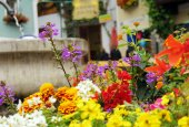Colourful flowers background — Stock Photo