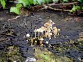 Mushroom on log — Stock Photo