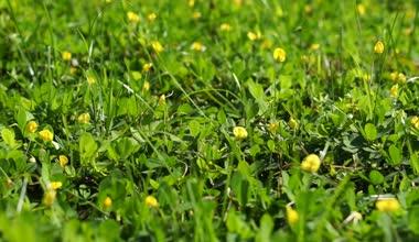 Butterfly on yellow cosmos flower field — ストックビデオ