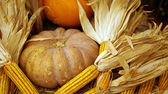 Autumn holiday pumpkin and corn, thanks giving — Stock Photo